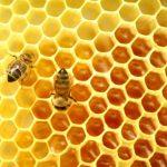 Kehebatan Madu Lebah Dari Sudut Pandangan Islam
