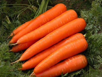 sayur lobak, sayur mencerahkan mata, kebaikan lobak, khasiat lobak, vegetarian lobak recipe, lobak in english, lobak seremban, lobak merah, lobak hijau, lobak masin, lobak indonesia, green lobak, jenis lobak,